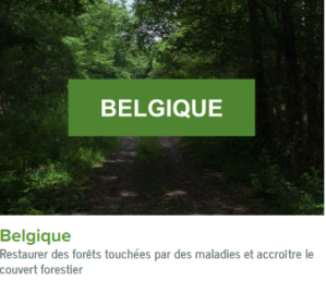 Belgique-ecolo-arbres-happy-positive-news