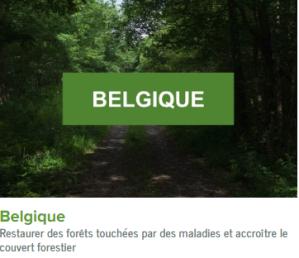 Belgique-ecolo-arbres-happy-positive-news