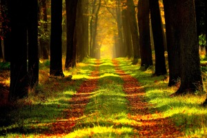 forest-plantation-happy-positive-news