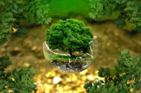 Forest-India-head-happy-positive-news