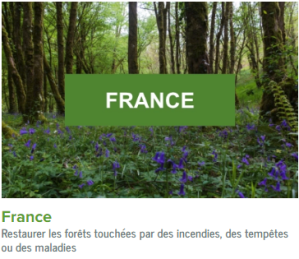 France-ecolo-arbres-happy-positive-news