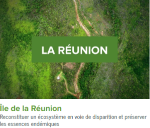 LaReunion-ecolo-arbres-happy-positive-news