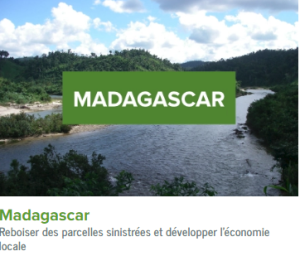 Madagascar-ecolo-arbres-happy-positive-news