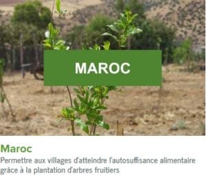 Maroc-ecolo-arbres-happy-positive-news