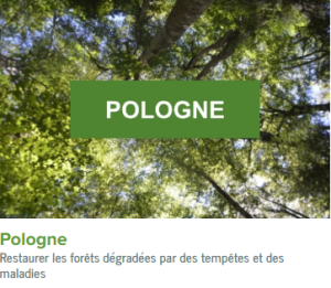 Pologne-ecolo-arbres-happy-positive-news
