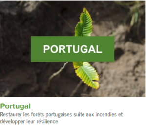 Portugal-ecolo-arbres-happy-positive-news