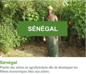 Senegal-ecolo-arbres-happy-positive-news